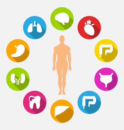 Illustration Silhouette of Male and Internal Human Organs Vectores