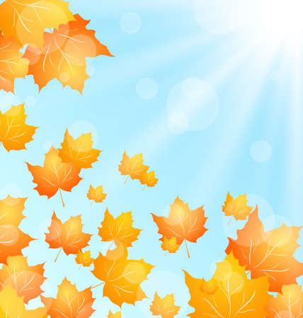 maples: Illustration Autumn Background with Flying Maples and Sunny Beams