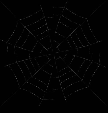 spider web: Trap Spider Web on Dark Background for Design Web or Nature concept - vector