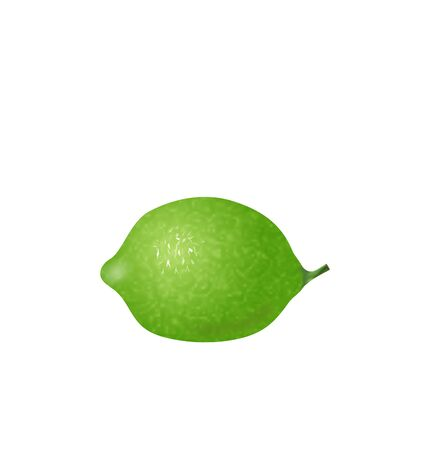 citric: Illustration Photo Realistic Lime Isolated on White Background - Vector Illustration