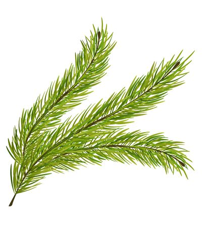 fir branch: Illustration Fir Branch Isolated on White Background - raster