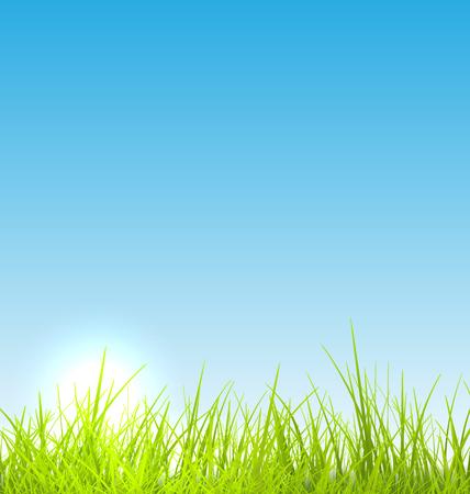 Green fresh grass and blue sky summer background - raster illustration