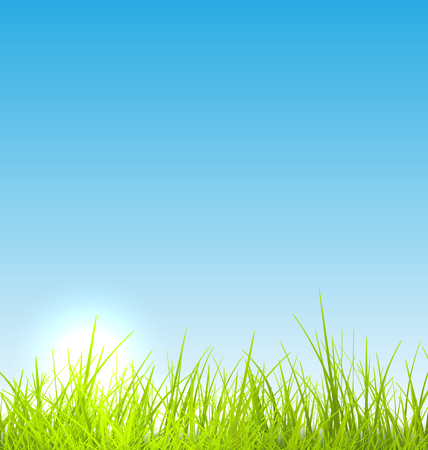 meadows: Green fresh grass and blue sky summer background - raster illustration