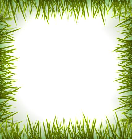 sedge: Realistic green grass like frame isolated on white, floral eco nature background - vector