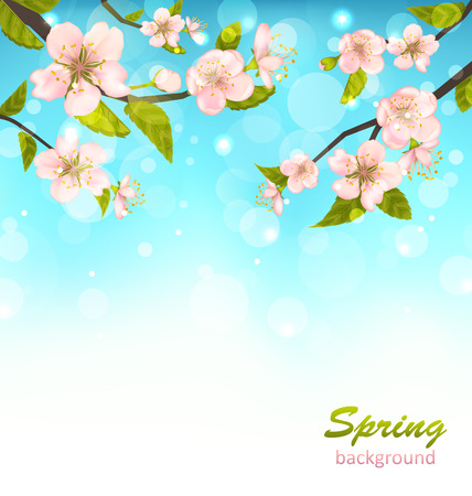 blossom background: Illustration Beautiful Cherry Blossom, Branches of Tree, Natural Glowing Background - raster