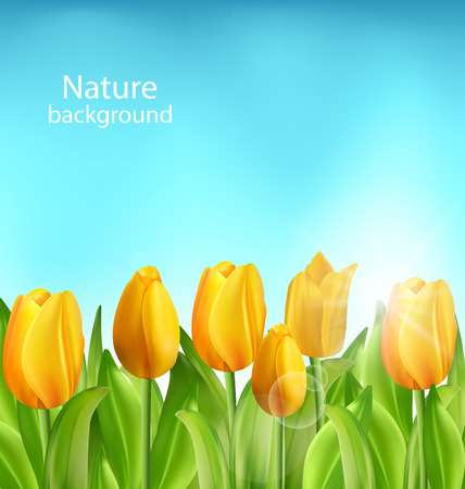 springtime: Illustration Nature Floral Background with Tulips Flowers and Blue Sky, Springtime, Environment, Beautiful Landscape - Vector