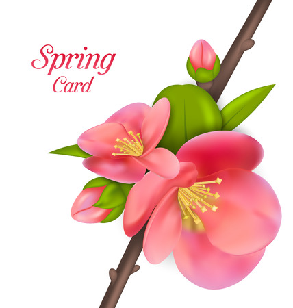 bloom: Illustration Spring Card with Branch with Buds of Japanese Quince Chaenomeles japonica in Bloom, Springtime Awakening - Vector
