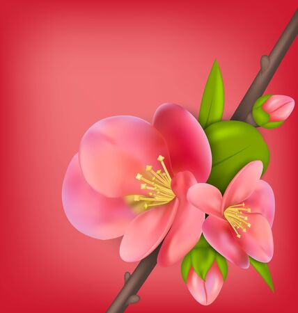 awakening: Illustration Branch with Buds of Japanese Quince Chaenomeles japonica in Bloom, Springtime Awakening. Copy Space for Your Text - Vector