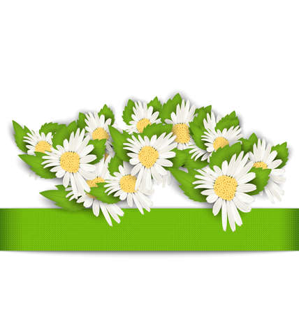 Illustration Beautiful Flowers Camomile with Shadows on White Background - raster