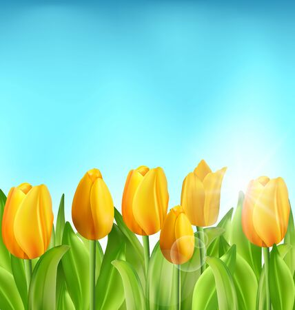 springtime: Illustration Nature Floral Background with Tulips Flowers and Blue Sky, Springtime, Summertime, Environment, Beautiful Landscape - raster Stock Photo
