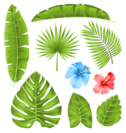 philodendron: Illustration Set of Tropical Leaves, Collection Plants Isolated on White Background - raster Stock Photo