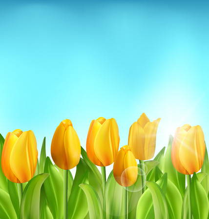 springtime: Illustration Nature Floral Background with Tulips Flowers and Blue Sky, Springtime, Summertime, Environment, Beautiful Landscape - Vector