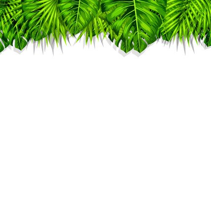 wilds: Illustration Natural Frame with Green Tropical Leaves, Summer Beautiful Background - Vector Illustration