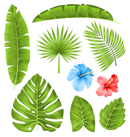 illustration: Illustration Set of Tropical Leaves, Collection Plants Isolated on White Background - Vector Illustration