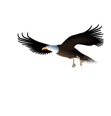 eagle flying: Illustration Flying Eagle Isolated on White Background - Vector