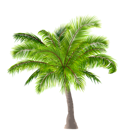 Realistic Palm Tree Isolated on White Background Stock Photo
