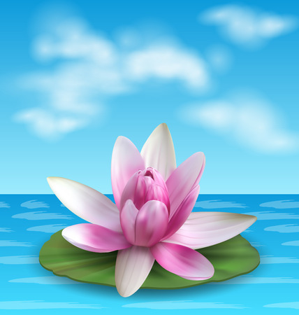 Water lily, nenuphar, pink lotus on green leaf.