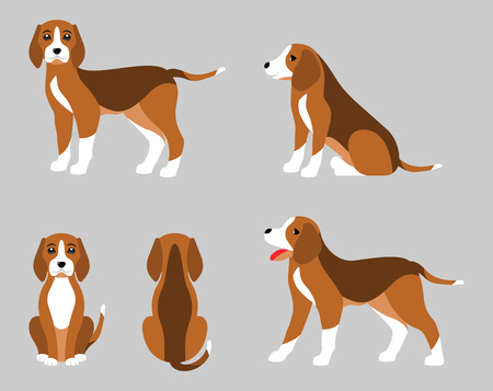 Various Poses of Dog Beagle, Simple Flat Style - Illustration Vector