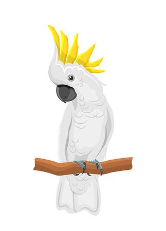 Loro cacatúa blanco en rama, pájaro exótico con cresta aislado Ilustración de vector