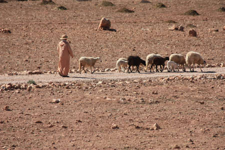 mountain goats: Shepherd in desert