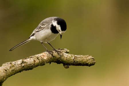 Bird watching a snail Stock Photo - 13618317
