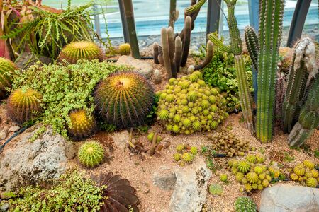 cactus top view background texture