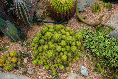 cactus top view background texture Banque d'images - 130797988