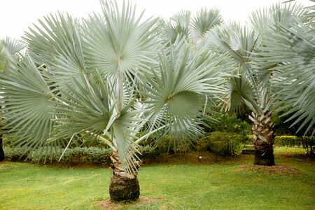 Palm tree in Singapore Park Stok Fotoğraf