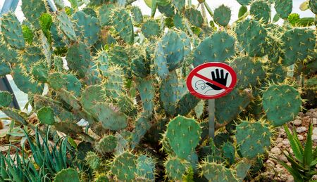 sign do not touch cactus