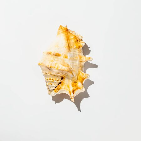 shell on white background isolate Banque d'images - 135168333
