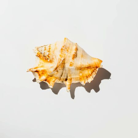 shell on white background isolate Banque d'images - 134842960