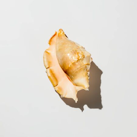 shell on white background isolate Banque d'images - 134843058