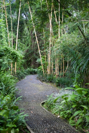 ubud: Botanical garden, Ubud Stock Photo