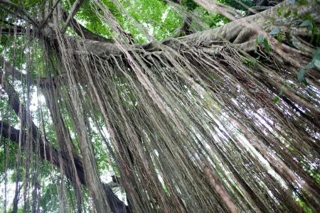 ubud: Monkey Forest Park in Ubud, Bali, Indonesia