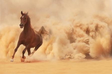 desert animal: Caballo �rabe corriendo de la Tormenta del Desierto Foto de archivo