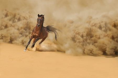 desert storm: Arabian horse running out of the Desert Storm