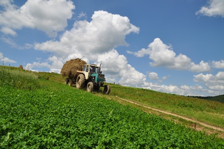 A tractor with the trailer the loaded hay in a summer rural landscape with a young clover and white clouds photo