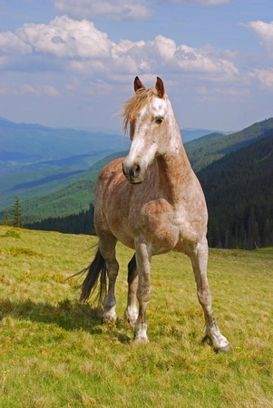 A horse on a hillside in solar summer day under the dark blue sky with clouds. photo