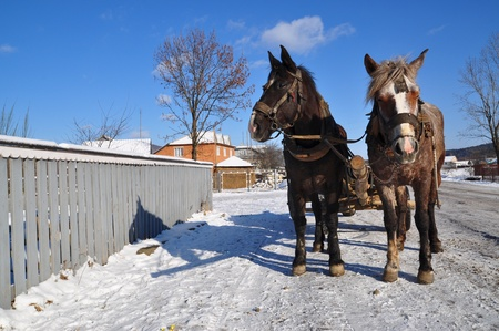 horse collar: Horses with a cart. Stock Photo