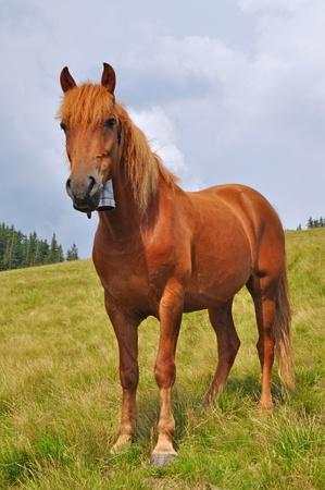 hillside: Horse on a hillside Stock Photo