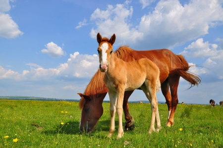 Foal with a mare on a summer pasture Zdjęcie Seryjne