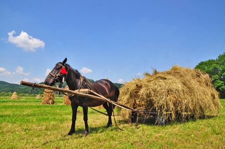 Hay preparation Stock Photo - 9856639