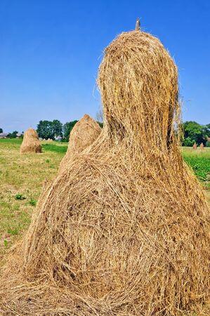 Hay in stacks Stock Photo - 9856897