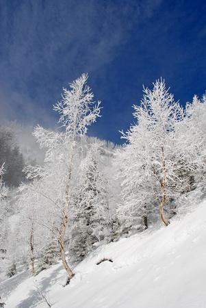 Winter on a hillside photo