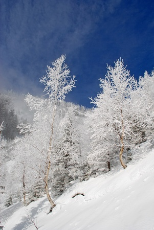 hillside: Winter on a hillside