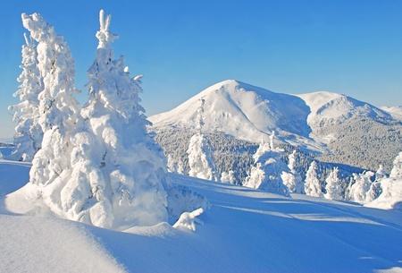 산속의 겨울