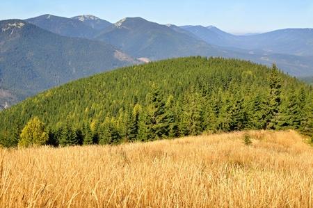 hillside: Autumn on a hillside Stock Photo