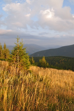 hillside: Evening on a hillside