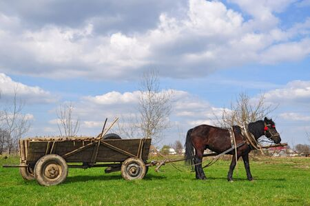 horse cart: Horse  with a cart