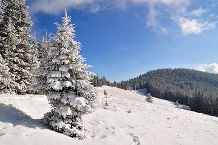 hillside: Winter hillside.
